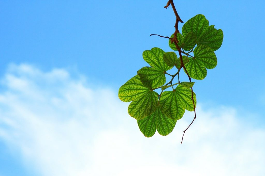 green leaf amid blue sky